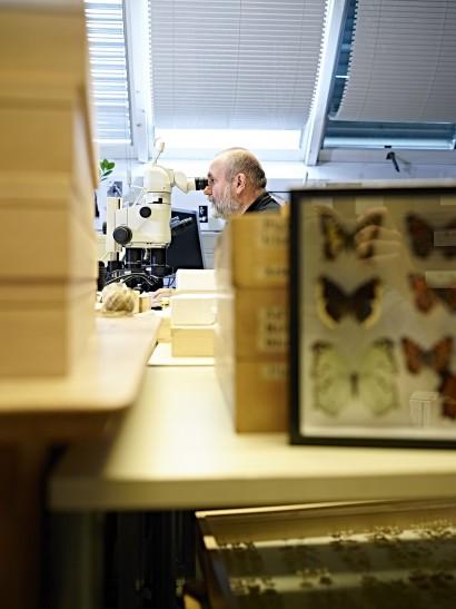 Insekten_019.jpg